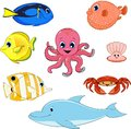 Set of marine animals vector illustration Royalty Free Stock Image