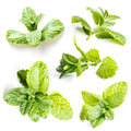 Set of mint leaves on white Stock Photos