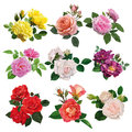 Set of multicolored roses Royalty Free Stock Photo