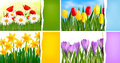 Set of nature backgrounds with colorful spring and Stock Photography