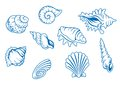 Set of ocean seashells Royalty Free Stock Photos
