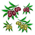 Set of olives branch paper stickers Stock Image