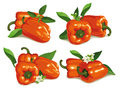 Set orange pepper leaves flowers Stock Photography