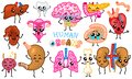 Set of organs. Cute happy human, smiling characters. Vector pins, cartoon kawaii icons. Healthy heart, intestine