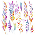 Set of ornamental plants, flowers, leaves, fruits and berries made in watercolors Royalty Free Stock Photo