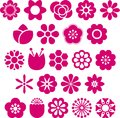 Set ornate hot pink flower illustrations isolated white Royalty Free Stock Images