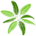Set of palm leaves Stock Photo