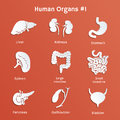 Set of paper icons with human internal organs vector Stock Image
