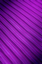 Set parallel mauve lines blurred edges Royalty Free Stock Photography