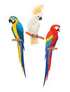 Set of parrots. Vector illustration. Royalty Free Stock Photo