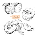 Set of peach collection hand drawn graphic illustrations Royalty Free Stock Photography