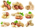 Set of peanuts isolated on the white background Royalty Free Stock Photo
