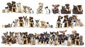 Set of pets cat and dog Stock Images