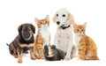 Set pets looking on a white background Royalty Free Stock Photos