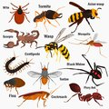 Set pf dangerous insects with their names color flat icons