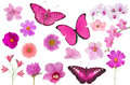 Set Of Pink Color Flowers And ...