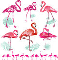 Set of pink flamingoes illustration Stock Photos