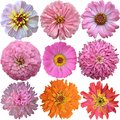Set of Pink - Orange  Flowers Royalty Free Stock Photo