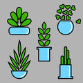 Set of plant in pots