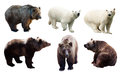 Set of polar and brown bears Royalty Free Stock Photo