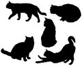 Set posing cats silhouettes Royalty Free Stock Image