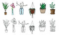 Set of pot plants, flowers in vase. Colorful elements and drawn black line on a white background.