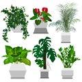 Set of potted houseplants.