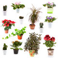 Set of potted plants Stock Image