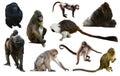 Set of primates Royalty Free Stock Photo