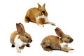 Set of rabbit image Royalty Free Stock Photo