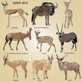 A set of realistic African antelope - oryx, eland, hartebeest, dik-dik, impala, springbok, wildebeest, duiker, kudu, blue gnu Royalty Free Stock Photo