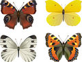 Set of   realistic butterfly Stock Images