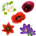 Set Of Realistic Flowers Royalty Free Stock Photography