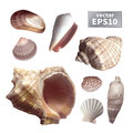 Set of realistic seashells