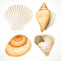 Set realistic seashells isolated on white background Stock Image