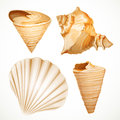 Set realistic seashells isolated on white background Royalty Free Stock Image