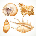 Set realistic seashells isolated on white background Royalty Free Stock Images