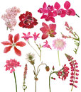 Set of red color flowers on white Royalty Free Stock Photo