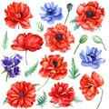 Set of red poppies and blue anemones flowers on isolated background, watercolor illustration Royalty Free Stock Photo