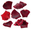 Set of red rose petals isolated on white