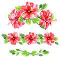 Set of red watercolor Hibiscus flower Royalty Free Stock Photo