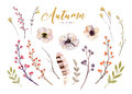 Set of red and yellow autumn watercolor leaves and berries, flowers hand drawn design foliage elements decoration.