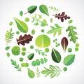 Set of salad greens