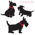 Set of scottish terrier dogs Stock Image