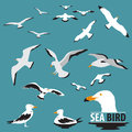 Set of Sea Bird and Seagull Royalty Free Stock Photo