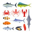 Set of sea river fish. Different kinds of seafood collection. Royalty Free Stock Photo