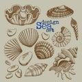 A set of sea shells