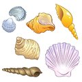 Set of sea shells illustrations in a cartoon style Stock Photography