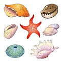 Set of sea shells illustrations in a cartoon style Royalty Free Stock Image