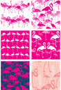 Set of seamless patterns with flamingoes pink Stock Image